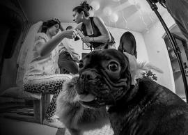 Свадьба Алина,Женя 14.06.2014 фото 11
